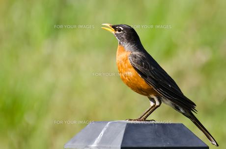 birdsの写真素材 [FYI00683320]