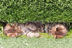 cats in the grassの写真素材 [FYI00683853]