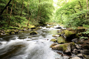 the river bode in the harz national parkの写真素材 [FYI00683922]