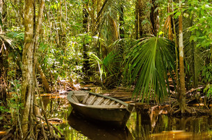 rowing boat in the jungleの写真素材 [FYI00684042]