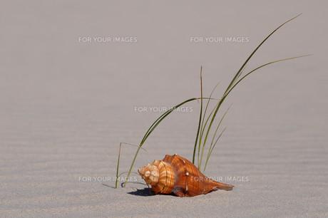 shellの素材 [FYI00684057]