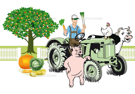 farmer on tractor with animalsの写真素材 [FYI00684066]