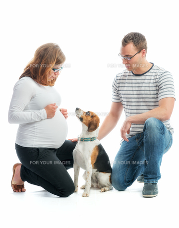 expectant parents with dogの写真素材 [FYI00684069]