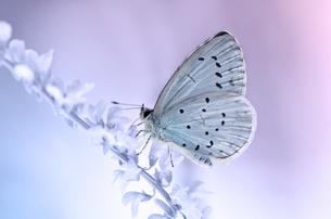 bluebirdの素材 [FYI00684146]