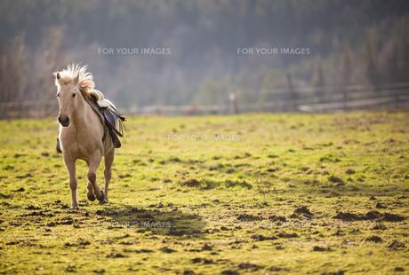 useful_animalsの写真素材 [FYI00684245]