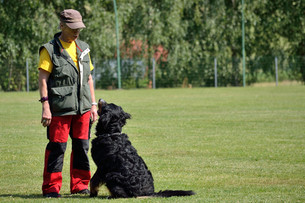 dog sitting in front of dog trainerの写真素材 [FYI00684402]