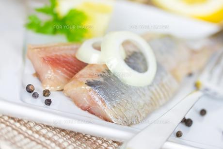 fishの写真素材 [FYI00684773]