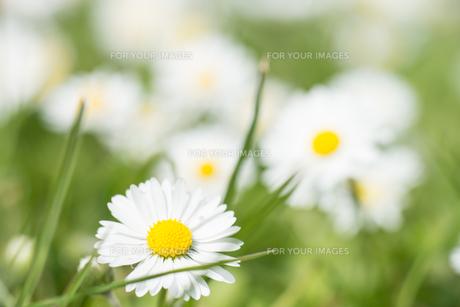 plants_flowersの写真素材 [FYI00684857]