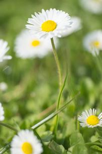 plants_flowersの写真素材 [FYI00684860]
