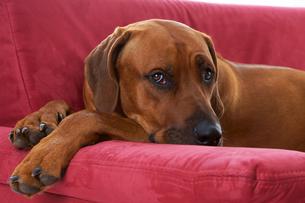 home_animalsの写真素材 [FYI00685351]