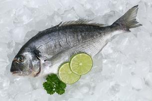 dorade fish on iceの写真素材 [FYI00685407]