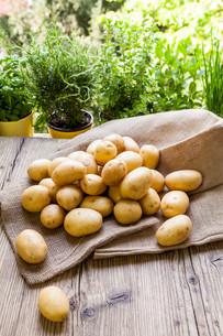 fresh new potatoes on a hessian sackの写真素材 [FYI00685591]