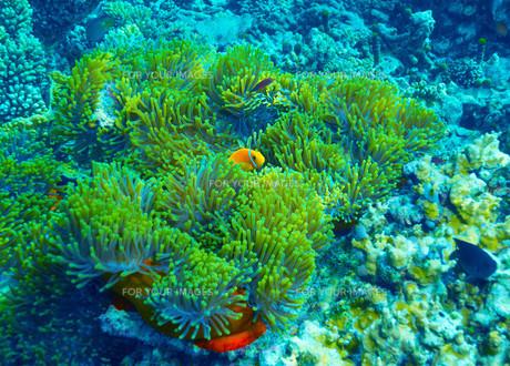 fishes_crustaceansの素材 [FYI00685861]