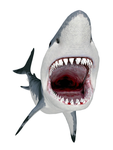 white sharkの写真素材 [FYI00685951]