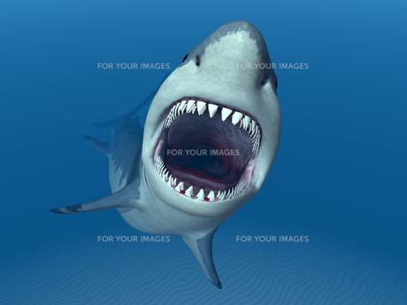 white sharkの写真素材 [FYI00685956]
