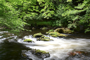 the river bode in the harz national parkの写真素材 [FYI00686097]