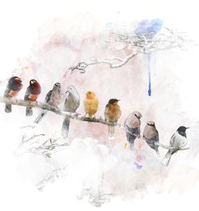 birdsの素材 [FYI00686335]