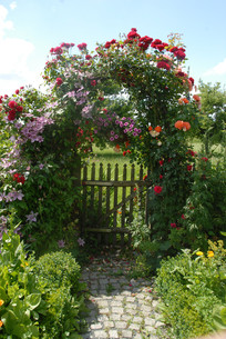 gates with climbing plantsの写真素材 [FYI00686594]