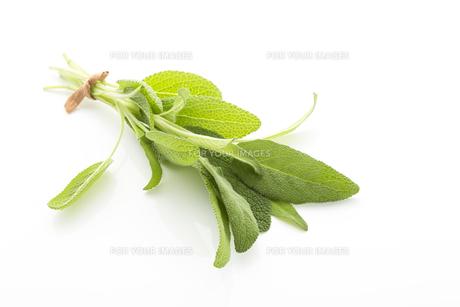 ingredients_spicesの素材 [FYI00686979]