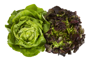 green salad isolated on white backgroundの写真素材 [FYI00687092]