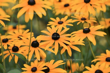 summer flowersの写真素材 [FYI00687420]