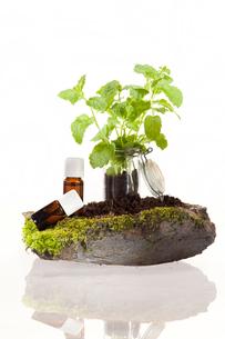 peppermint essential oilの素材 [FYI00688090]