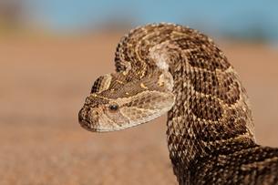 reptiles_amphibiansの写真素材 [FYI00688834]