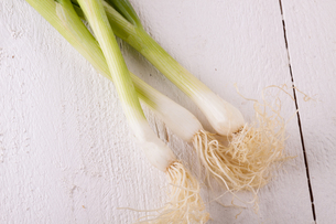 bunch of fresh spring onions spring onions with rootの写真素材 [FYI00688882]