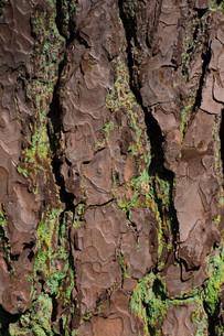 barkの写真素材 [FYI00688921]