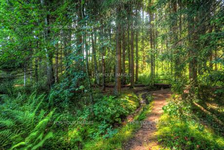 forestの素材 [FYI00689143]