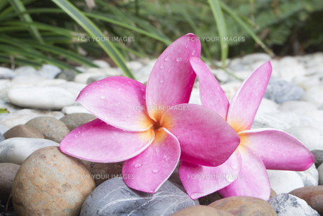 plants_flowersの素材 [FYI00689240]