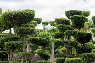 japanese gardenの写真素材 [FYI00689325]