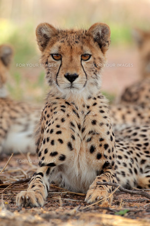 mammalsの写真素材 [FYI00689455]