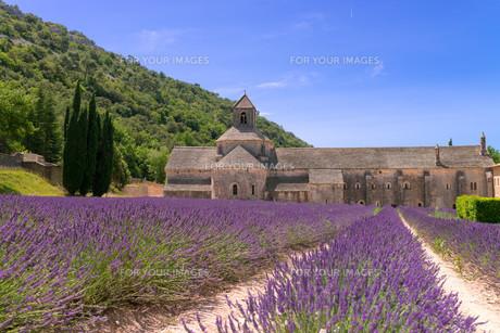 monasteries of the cistercianの写真素材 [FYI00689787]