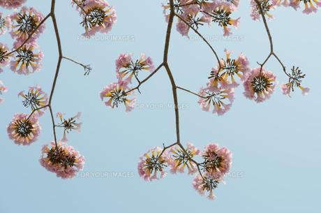 plants_flowersの写真素材 [FYI00689856]