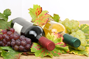 white and red wine,wine bottlesの写真素材 [FYI00691238]