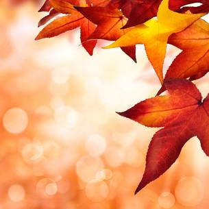 autumn background,squareの写真素材 [FYI00691313]