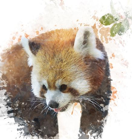 animalの素材 [FYI00691317]