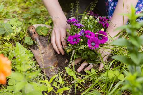 plant flowersの素材 [FYI00691492]
