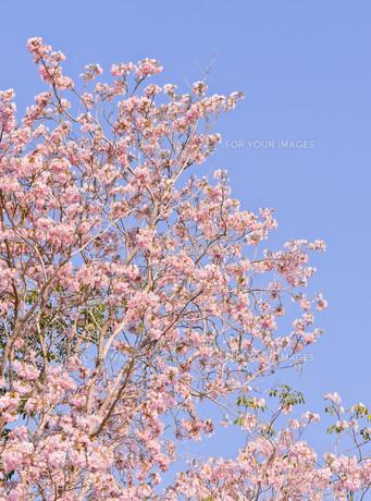 plants_flowersの写真素材 [FYI00691611]