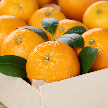 oranges fruit in box with copy spaceの素材 [FYI00692024]