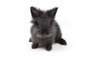 osterhase - easter bunnyの写真素材 [FYI00692089]