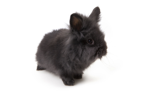 easter bunny - easter bunnyの写真素材 [FYI00692090]