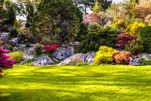 gardens,muckross killarney national park,irelandの写真素材 [FYI00692854]
