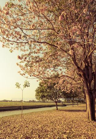 parkways_gardensの写真素材 [FYI00694551]