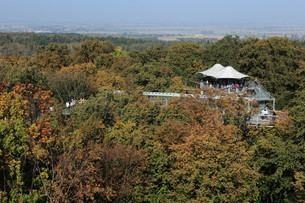 the hainich national park in thuringiaの写真素材 [FYI00695292]
