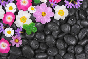 stones with flowers and water dropsの写真素材 [FYI00695575]