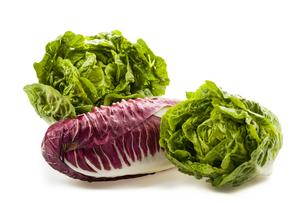 fresh organic lettuce heartsの写真素材 [FYI00695676]