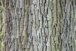 treeの素材 [FYI00696372]