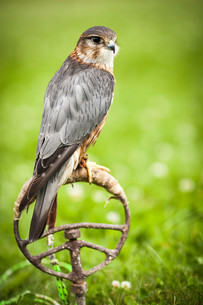 birdsの写真素材 [FYI00696424]